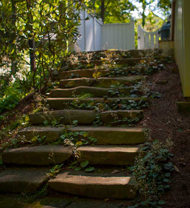 Stone Steps in the Morning