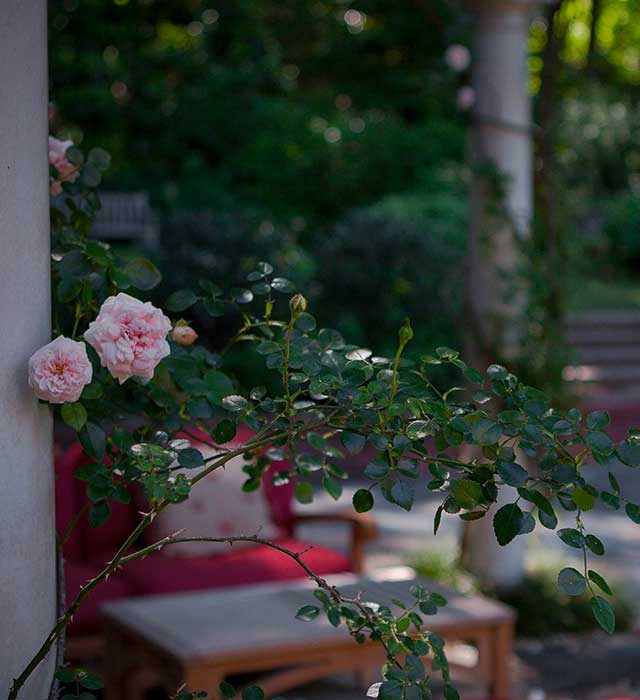 Leaning Rose Terrace with Casual Seating